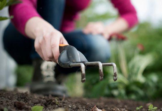 Plant nu om straks te genieten van smaak en kleur